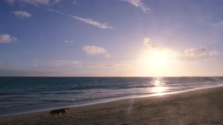 dusk : Ocean Shore At Sunset with Dog Walking Off. a slow motion view of a shoreline beach in Hawaii with a dog walking out of frame in slow motion