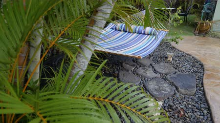 Rising to Hammock and Palm Tree. a rising shot of a hammock in a backyard with a palm tree in the foreground Dostupné videozáznamy