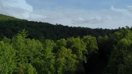 ascensão : Forest Tree Canopy Top Rising Aerial. an aerial view rising above the tree tops in a forest