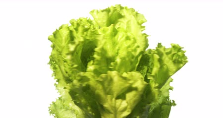 антиоксидант : Lettuce Salad Spinning on White Background