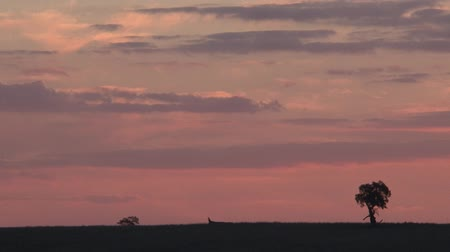 krzak : Country Tree Landscape sunset Wideo