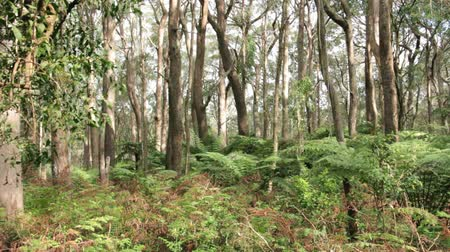 krzak : Australian Temperate Bush Forest Landscape Wideo