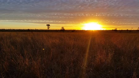 ausztrál : Australian Sunset  Sunrise Landscape over grass field