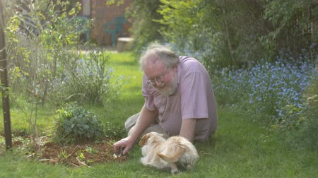emekli : Grandfather retired elderly mature senior adult retirement gardening with dog Stok Video