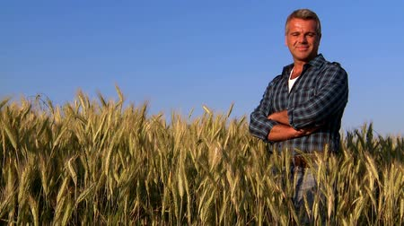 rolnik : Mature farmer looking with satisfaction at his cultivated field and having care of wheat after a working day. Mature man contemplates the field of wheat grown.