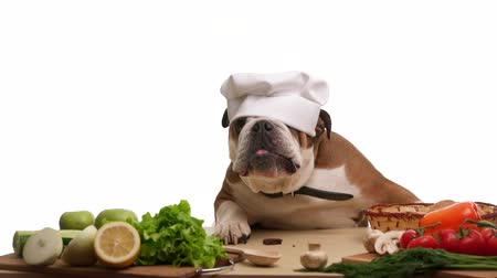 cooks : English Bulldog as a chef eating mushrooms Stock Footage