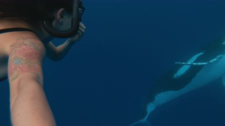 кит : Asian Female Freediver With a Huge Whale in The Background, Whales swim in the Pacific Ocean of the kingdom of Tonga. Selfie shot on action camera