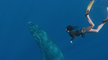 웅대 한 : Girl snorkeling with whale, Amazing shot taken on an action camera, Is an Asian freediver swimming next to a magnificent humpback whale, Frame shot in the kingdom of Tonga 무비클립