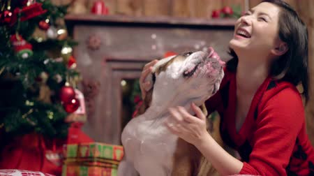 buldok : charming asian girl loves and caresses a cute funny bulldog under the Christmas tree. Girl puts Santa Claus hat on a dog. Christmas. New Year. suitable for christmas promotion Dostupné videozáznamy