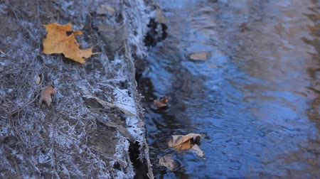 boulders : Yellow maple leaf on the frozen bank of a stream