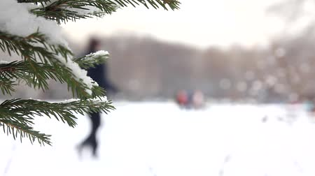 In the winter city park Stock Footage
