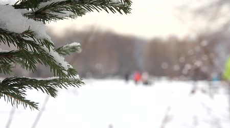 Snow-covered spruce branches and skier-skating figure