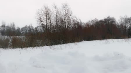 Snowstorm in winter field Stock Footage