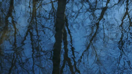 a blue sky with trees reflected in stream Stock Footage