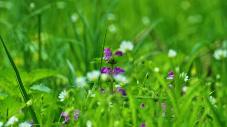 Spring flowers in thick grass