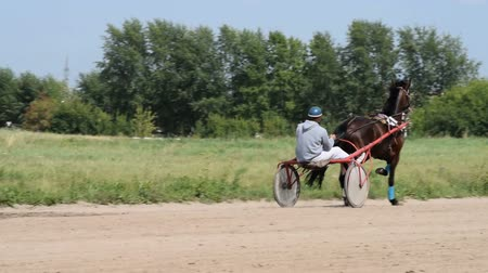 horserace : Horse with jockey in cart on race track