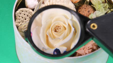 konzervált : Flower arrangement and magnifying glass