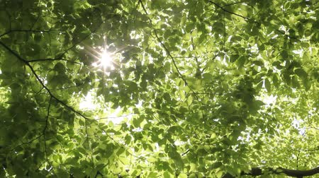 coming : Sunlight filtering through the leaves of trees