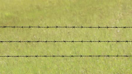 farpa : Barbed wire and grass swaying Stock Footage