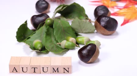 meşe palamudu : Acorns and Horse Chestnuts and wooden block with AUTUMN