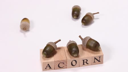 meşe palamudu : Acorns and wooden block with ACORN