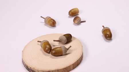 meşe palamudu : Acorns on the wooden plate Stok Video