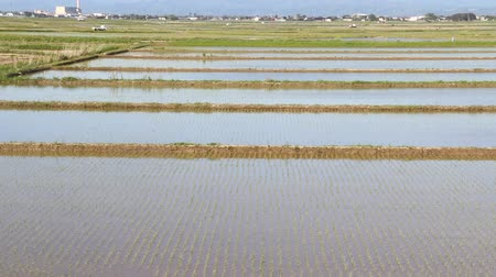 seedlings : Paddy field in Japan, early spring Stock Footage