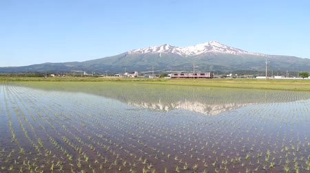 mt : Chokai mountain in the rice paddies and local train Stock Footage