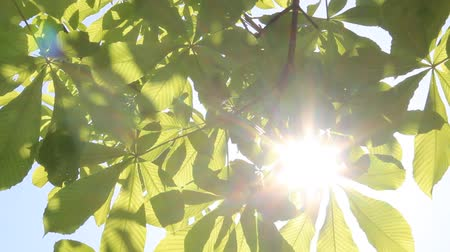 breezy : Sunlight filtering through the leaves of trees