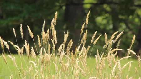 breezy : Grass swaying in the wind