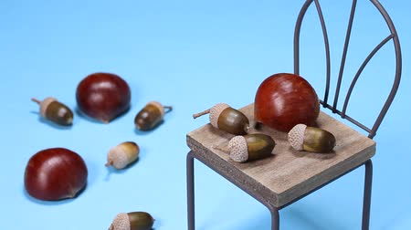 meşe palamudu : Chestnuts and acorns and miniature chair