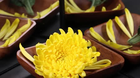 chrysanthemum : Yellow chrysanthemums and petals reflected in the mirror
