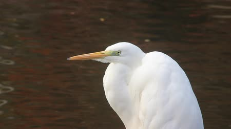Egret by the pond in Japan