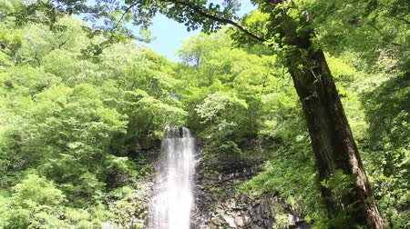 ion : Tamasudarenotaki waterfall,yamagata prefecture Japan