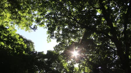 sallama : Sunlight filtering through the leaves of trees