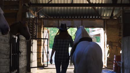 Çingene : The girl takes the horse out of the stall. Frame from the back. Stok Video