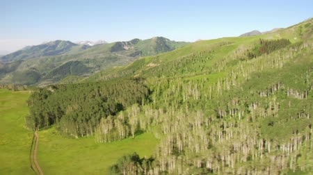 alpy : aerial shot of green forest and mountains and meadow