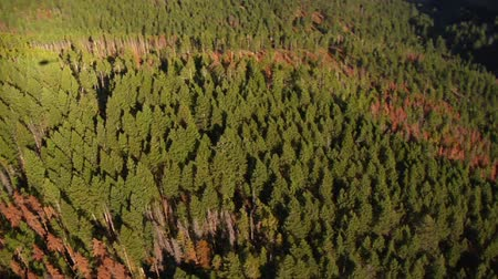 alpy : aerial shot of fields and forests with dead trees Dostupné videozáznamy