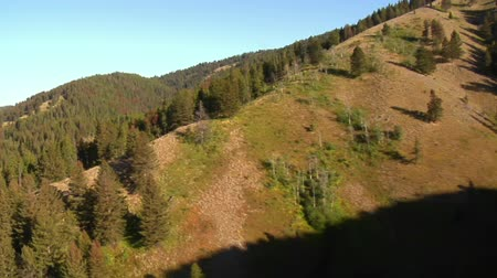 alpy : aerial shot of forest and mountainside