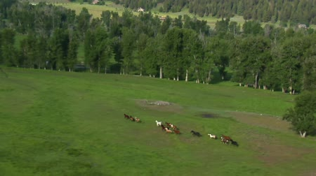 údolí : aerial shot of horses running in Green Valley