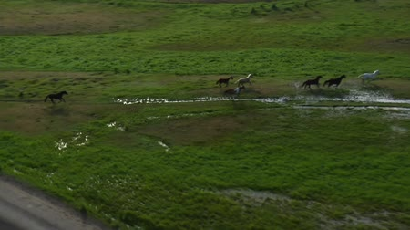 ranč : aerial shot of cowboys and horses in Green Valley Dostupné videozáznamy