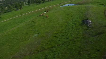vallei : Luchtfoto van cowboys en paarden in Green Valley