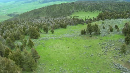 волк : Wolves in grassy meadow near Paradise Valley Montana, aerial