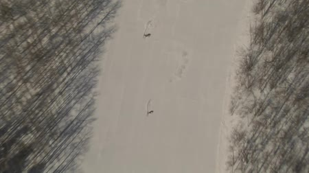 лыжник : aerial shot of two skiers carving run Стоковые видеозаписи