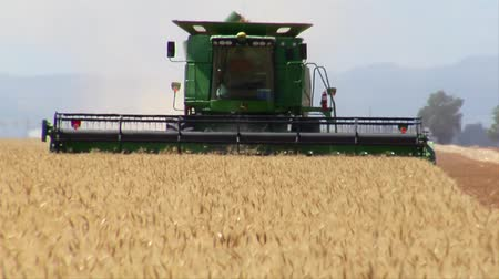 trator : combine harvests wheat in field