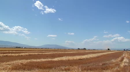 row : newly harvested wheat field and blue sky