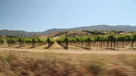 winogrona : driving through California wine country