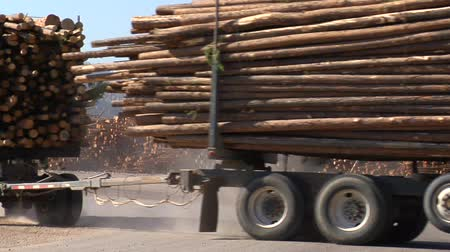 лесозаготовки : double length log truck pulls into lumber mill Стоковые видеозаписи