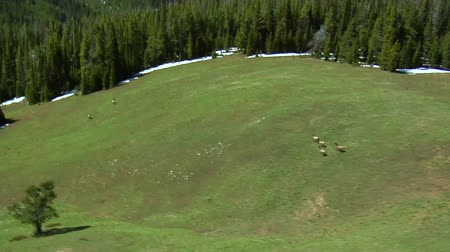 олень : Aerial shot of animals running up lush hill in mountains