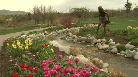 laleler : crane shot up to Tulips to park Stok Video